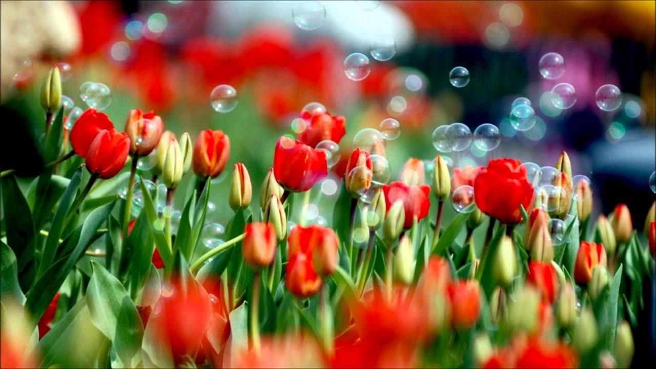 arte y jardinera diseo de jardines youtube