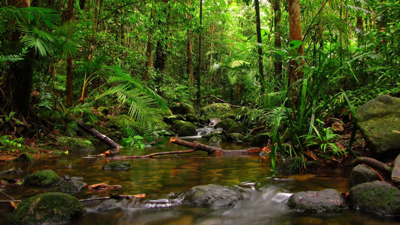 Top 10 Most Beautiful Tropical Rainforests - YouTube