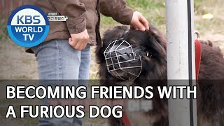 Becoming friends with a furious dog [Dogs are incredible/ENG/2020.03.31]