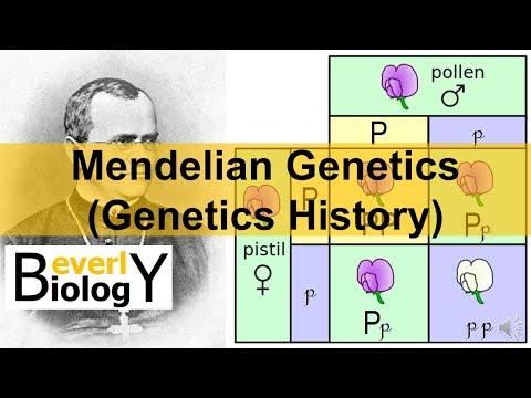 Mendelian Genetics (Genetics History)