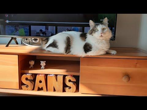 Sahibine masaj yaptırtan ve sahibiyle konuşan kedi ŞANS.Talking cat luck loves massage