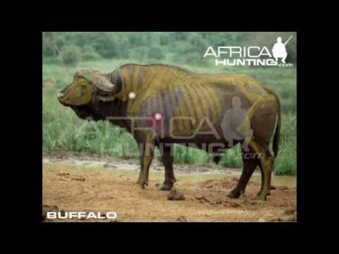 Hunting Shooting Big Game Shot Placement - AfricaHunting.com