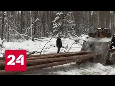 """Связи не спасли """"черных лесорубов"""" от наказания - Россия 24"""