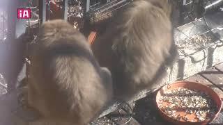 19/01/19 サルVS風小僧!⚠️音量注意⚠️ thumbnail