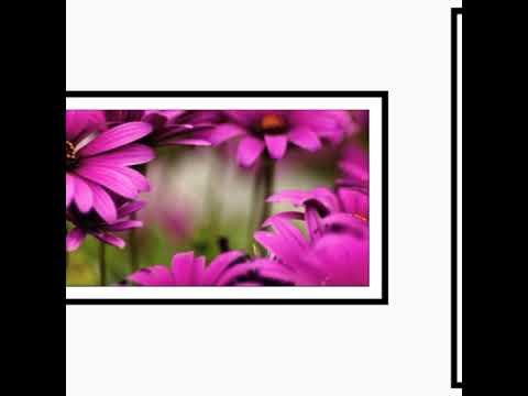 Картинки.#5. Цветы.