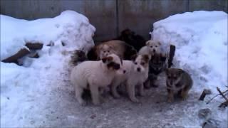 Собаки Бездомные дворовые щенки 31 декабрь 2014