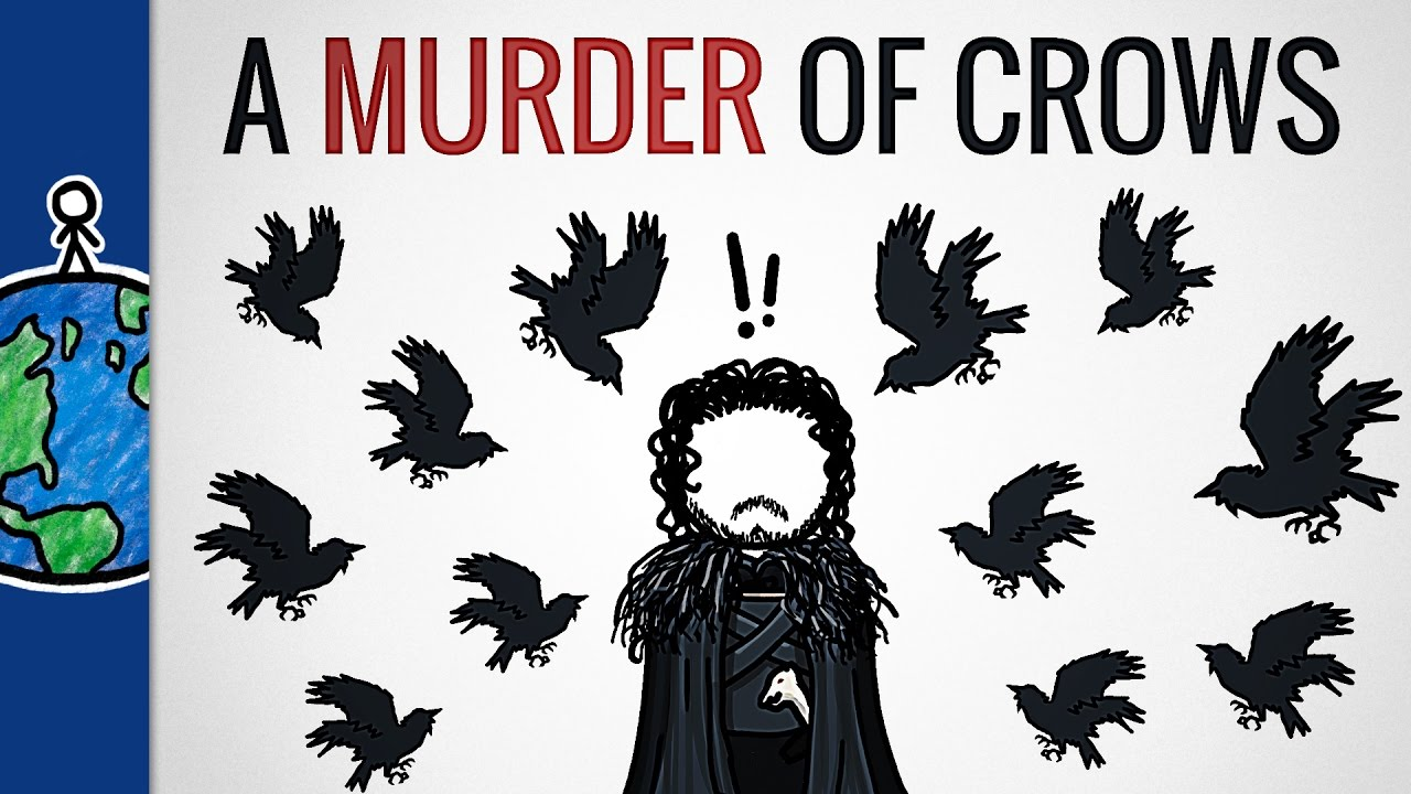 why is a group of crows called a murder youtube