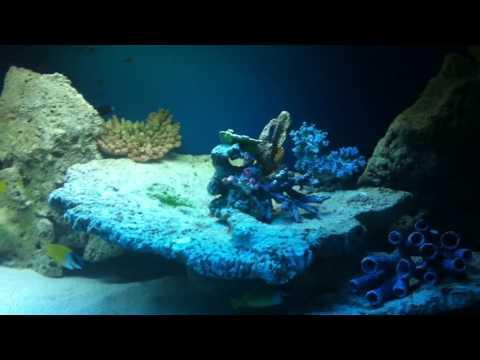 Oceanarium Ozeanarium Swinoujscie Swinemünde Insel Usedom