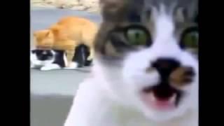 ▶ Cat Кошки Умора Смешно! Юмор! Прикол! Смех   YouTube 360p