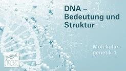 [Molekulargenetik 1]  DNA – Bedeutung und Struktur