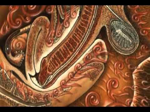 Hd wallpaper education - Alex Grey World Spirit Live Performance 2 6 Youtube