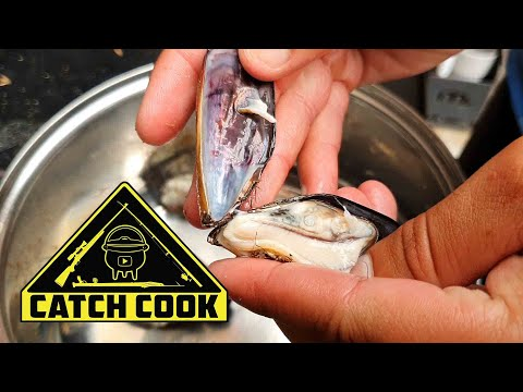 Foraging for Mussels in Nahoon Reef, East London, South Africa | CATCHCOOK