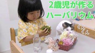 2歳児が作るハーバリウム ~ 2歳5ヶ月・女の子【イクメンやってます #169】