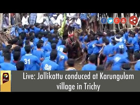 Live: Jallikattu conduced at Karungulam village in Trichy