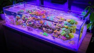 3 Hours of Shallow Reef Aquarium Relaxation [Aquarium Meditation]
