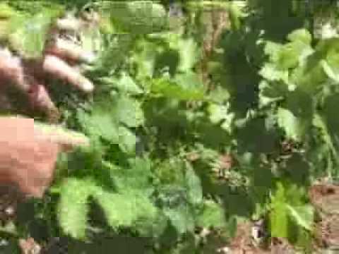 Domaine de Bannières - Organic Wine - South of France