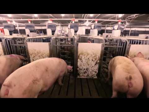 Electronic Feeding System