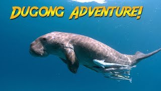Dugongs of the Philippines | JONATHAN BIRD