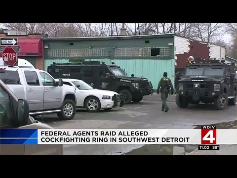 Federal agents raid alleged cockfighting ring in southwest Detroit