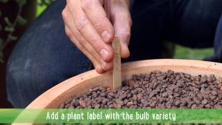 How to: Plant spring flowering bulbs