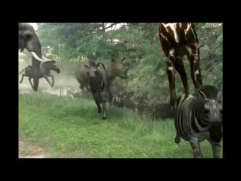 Stampede Based On The Lion King Youtube