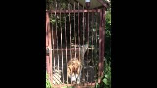 Собака очень любит когда её гладят :)
