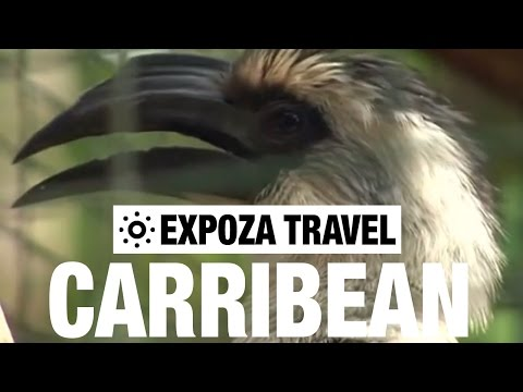 The Caribbean Vacation Travel  Guide