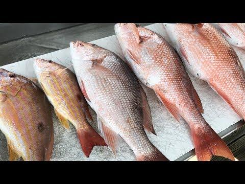 No Catch n Cook Just Crushing Fish! thumbnail
