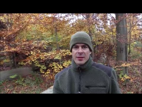 Metal Detecting Germany Nr.73 At Least The Leaves Were Golden