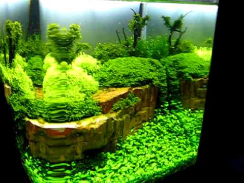 The Art of the Planted Aquarium 2011 Hannover - Argus Akwarystyka