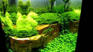 The Art of the Planted Aquarium 2011 Hannover - Argus Akwarystyka