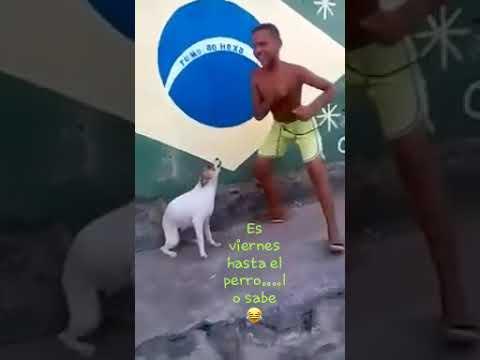El perro vailador
