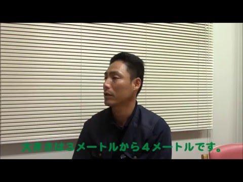 黒文字クロモジの特徴・剪定 加須久喜幸手市の植木屋