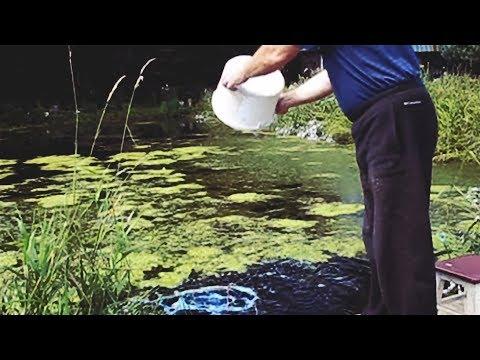 Как избавиться от ряски в пруду советы