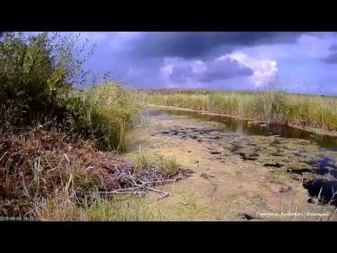 Лето 2019 Последние летние раскаты грома в Эстонии Бог Уку откашлялся :)