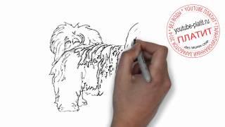 Нарисованные карандашом собаки  Как нарисовать карандашом поэтапно мохнатого пса