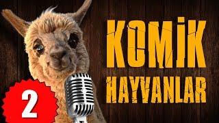 Pisi TV Komik Hayvanlar 2 - Bu Hayvanlar Konuşuyor