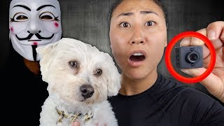 HIDDEN CAMERA FOUND ON PUPPY!! (PROJECT ZORGO)