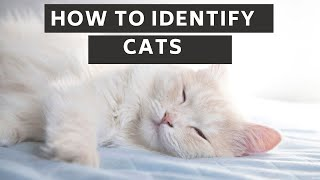 How to identify cats updated 2021 || How to identify cats age