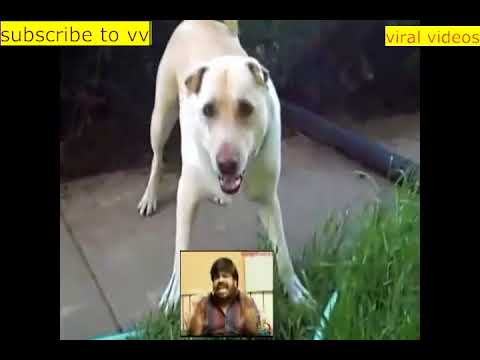T Rajendar music comedy reactions.must watch african song