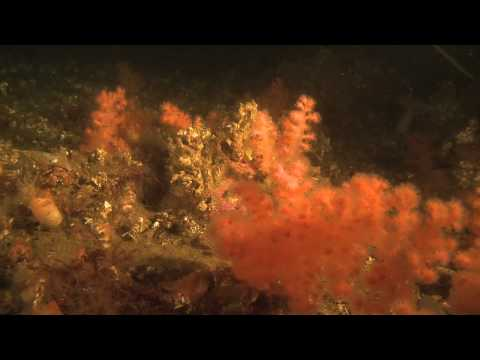 Arctic Under Pressure: Deep Sea Life
