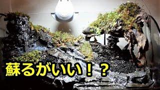 蘇るがいい!? 滝のテラリウム立ち上げpart6 「乾燥ゴケ」
