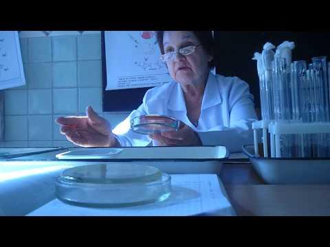 Микробиология. Практика. Факторы патогенности