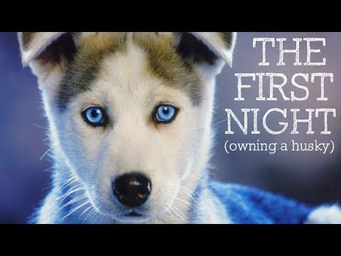 The First Night Owning A Husky Puppy...