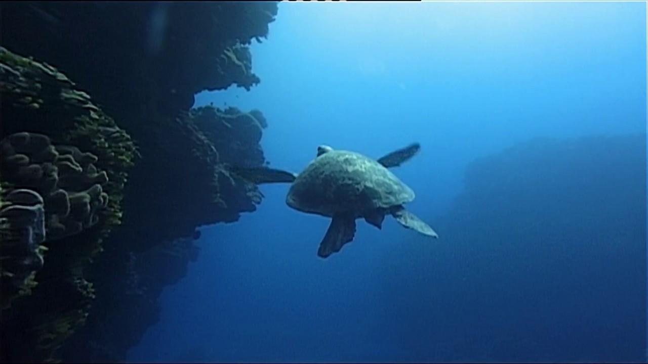 Download Be A Predator : Oceans (Wildlife Documentary)