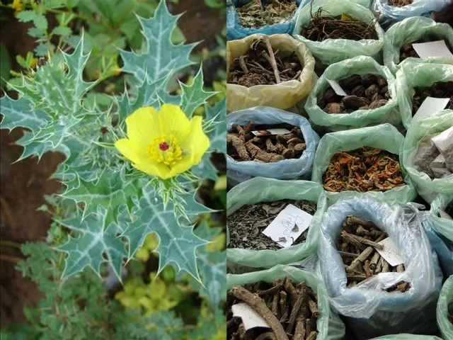 Argemone (Satyanashi) based Formulations for Bronchocele: Pankaj Oudhias Medicinal Plant Database