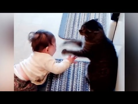 MOST Crazy Cats Annoying Babies ( PART 01) - Top Funny Cats Annoying Babies and Babies Annoying Cats