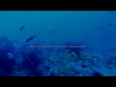 Blue Corals Dive Havelock Island India