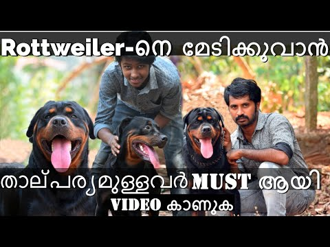 Rottweiler-നെ മേടിക്കുവാൻ താല്പര്യമുള്ളവർ  Must ആയി Video കാണുക[Bow Wow] Rottweiler dog lovers