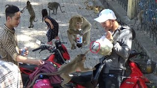 One Day Visit Monkeys Conservation Area With Family - Toa Thanh , Tay Ninh , VietNam